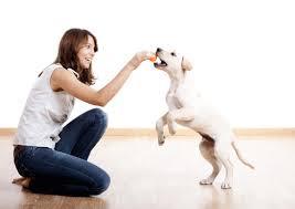 claves para entender a su perro