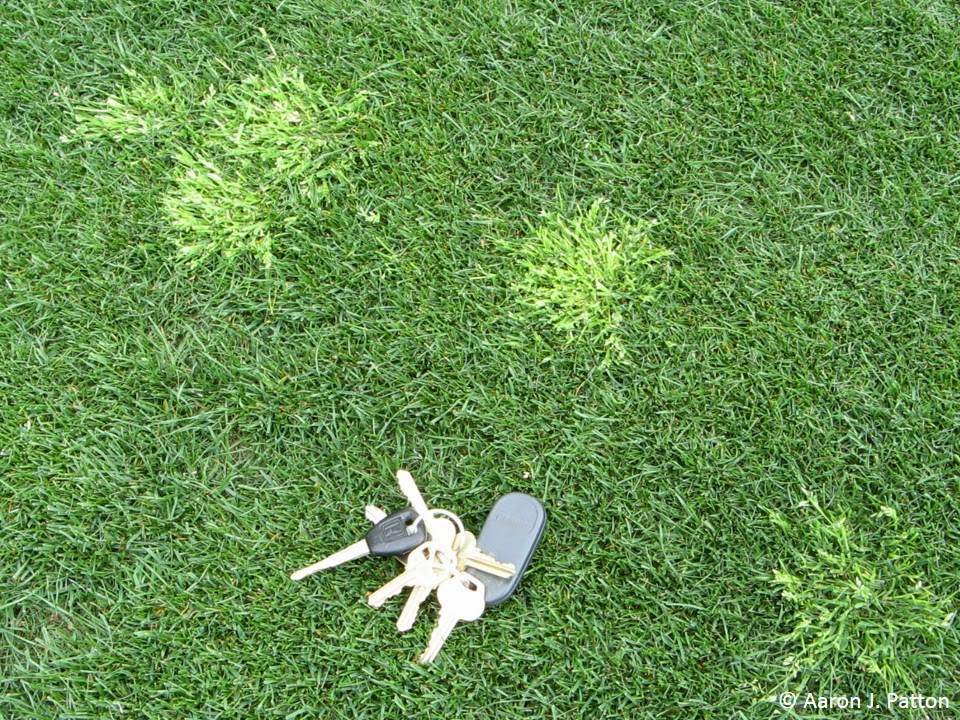Beautiful Purdue Turf Tips: Weed of the month for January 2014 is Annual  AL67