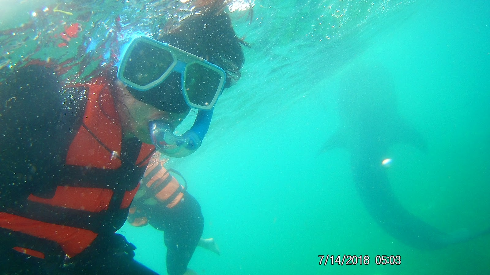 Swimming with whale sharks in Oslob Cebu Philippines | Ummi Goes Where?