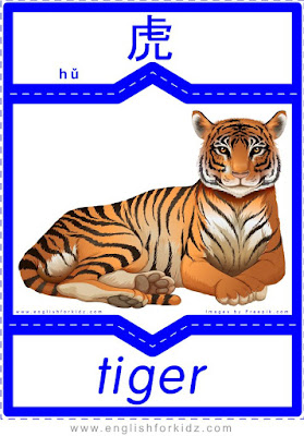 Tiger - English-Chinese flashcards to learn names of wild animals