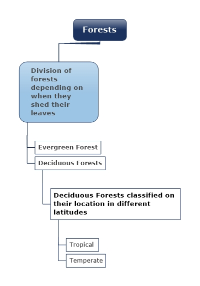 Division of forests depending on when they shed their leaves