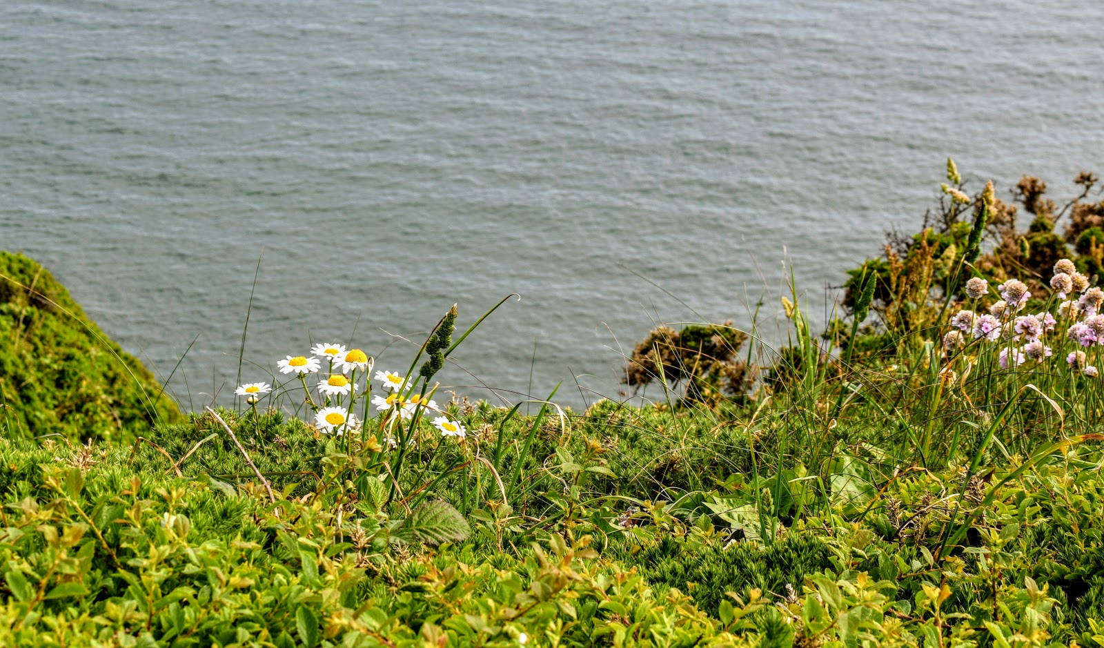 , Days Out:  Snapshots of Lindsway Bay, St Ishmaels
