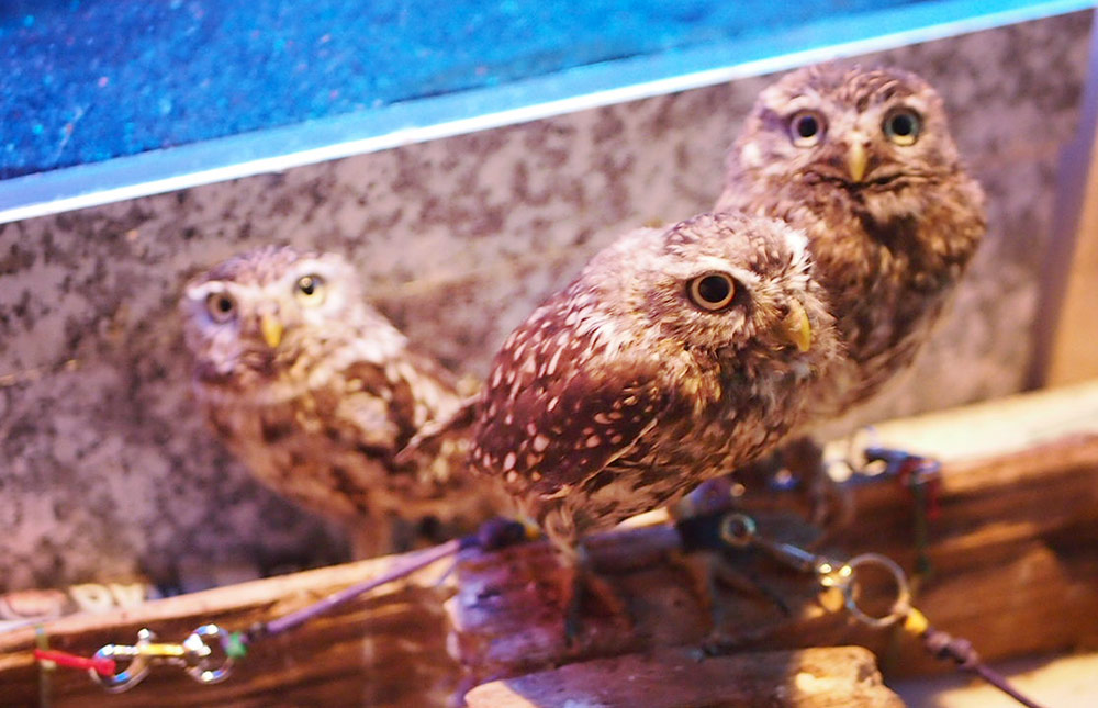 Owl Cafe {Japan Travel} - What it is like to become friends with owls - Every Little Thing