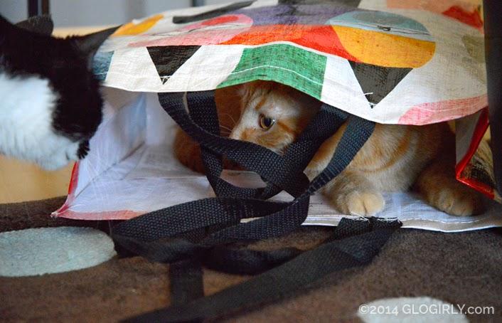 Katie looking at Waffles in shopping bag