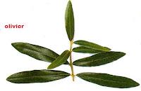 Huile d'olive réduit les triglycérides dans le sang