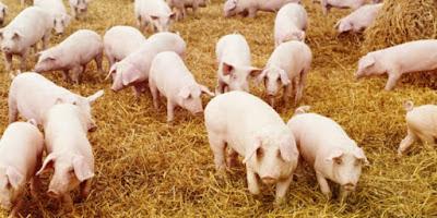 Pemerintah Kota di Perancis Paksa Supermarket Halal Menjual Daging Babi dan Alkohol