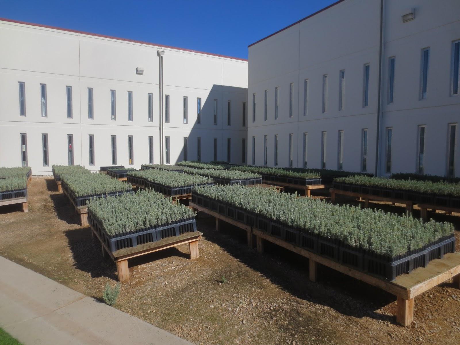 Idaho Fire Information: Sagebrush in Prison Project yields