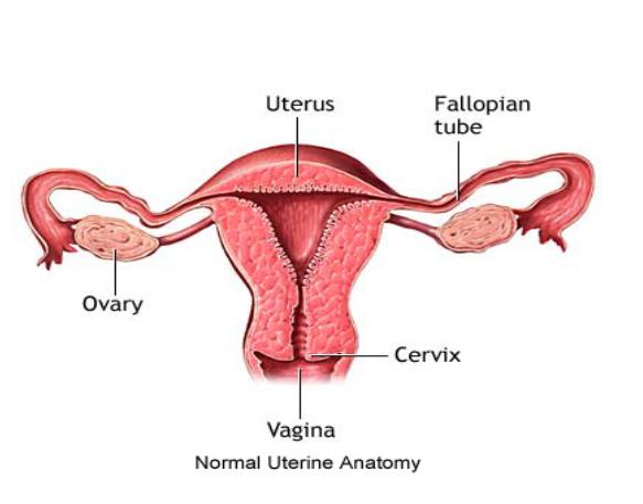 http://mannatfertility.com/Treatment-for-Recurrent-pregnancy-loss.php