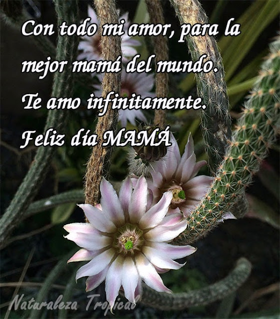 Con todo mi amor, para la mejor mamá del mundo, Te amo infinitamente.