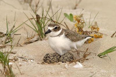 Galveston Island Hosts FeatherFest, One of the Largest Birding Festivals in Texas