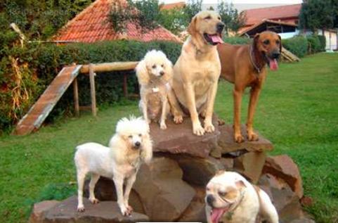 adopt a pet Compreendendo o Comportamento dos Cães