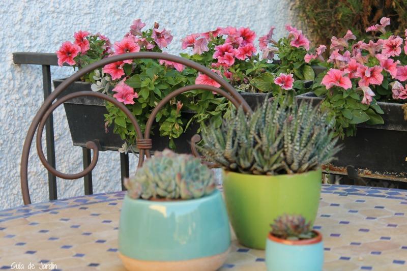 Petunias y suculentas