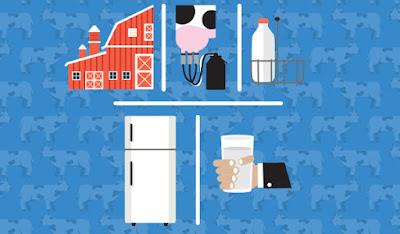 Chuỗi sữa cung cấp: Từ nông trại đến tủ lạnh