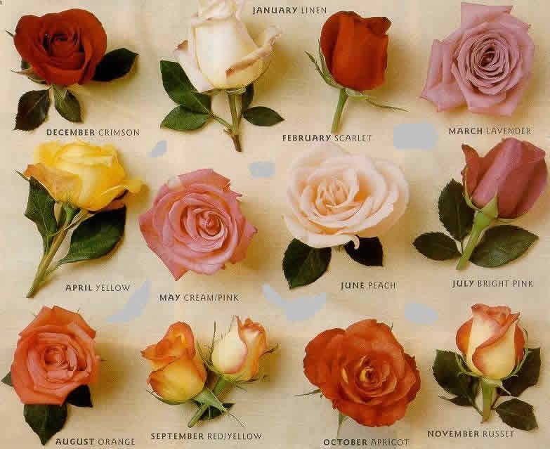 different types of roses -#main