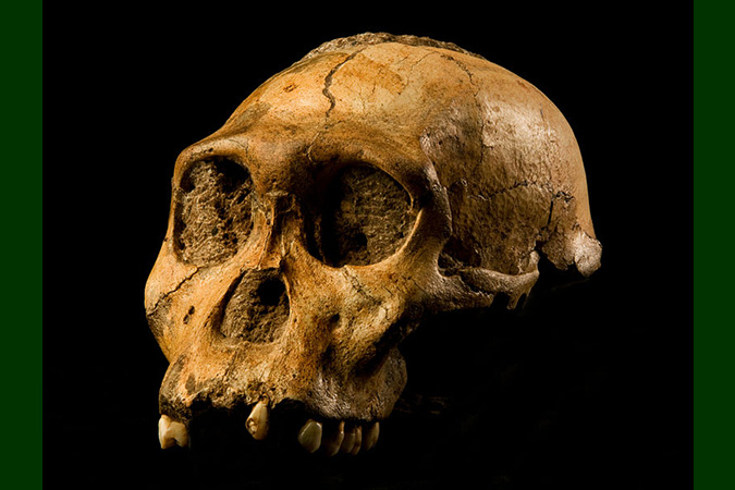 Dlium Temporal evidence shows Australopithecus sediba is unlikely to be the ancestor of Homo