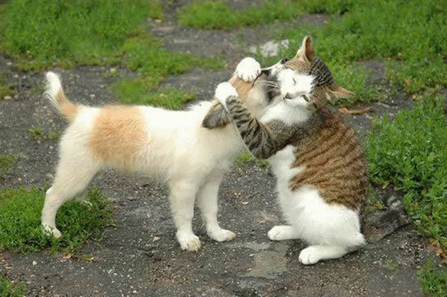 Funny pictures gallery funny valentine animals funny - Valentine s day animal pics ...