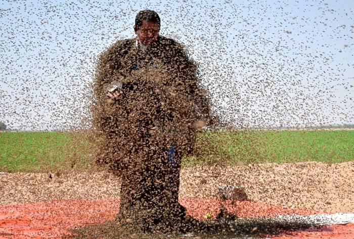 A man, covered with 64 kilograms of bees, stands on the scales, trying to set a world record. Saudi Arabia, September 11th. Posted by: Mohamed Alvaiti