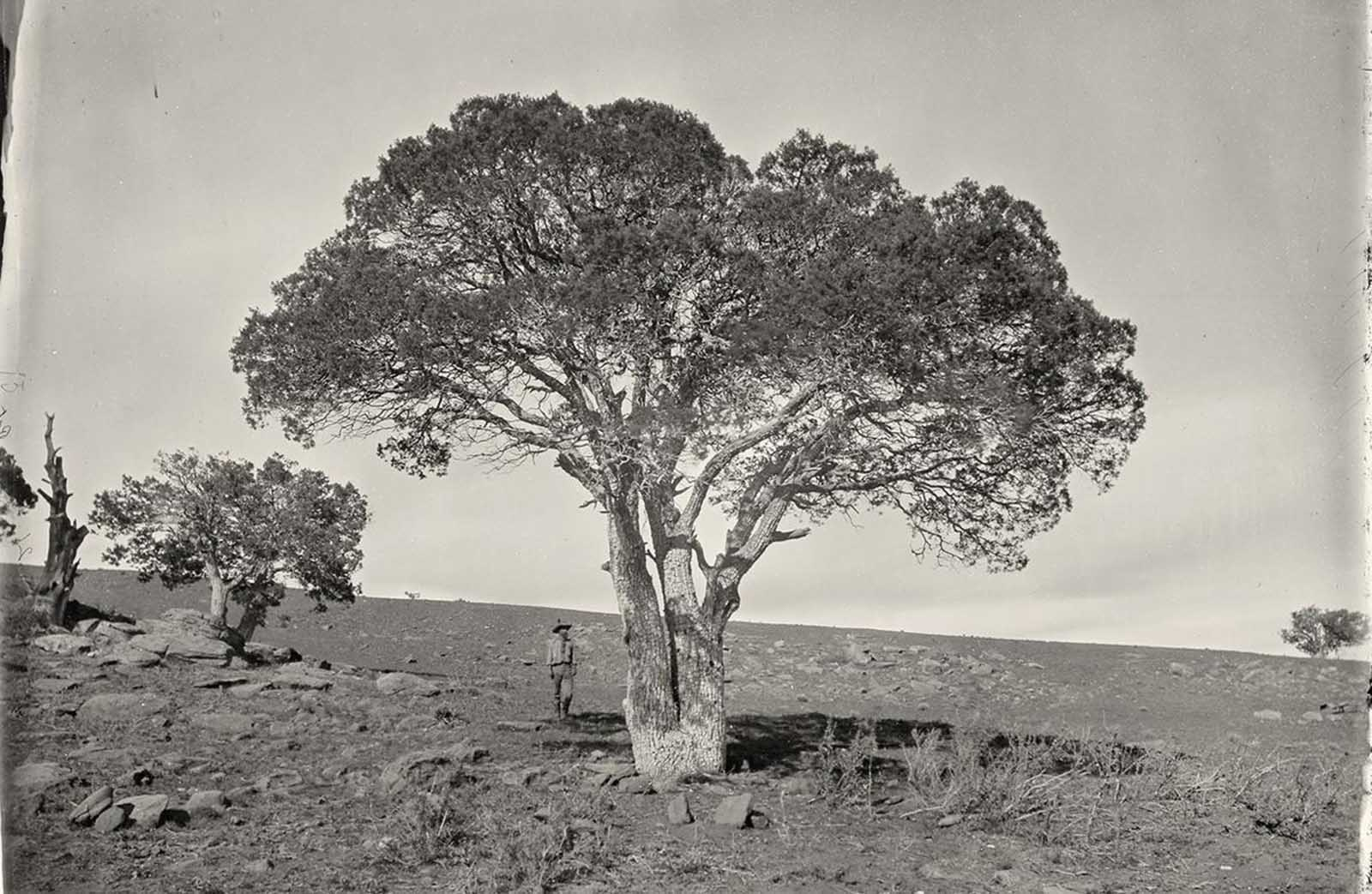 Oak Grove, White Mountains, Sierra Blanca, Arizona in 1873.