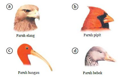 Jenis Makanan Burung Berdasarkan Paruhnya