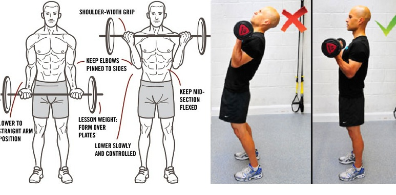 How to Do Bicep Curls Right - all-bodybuilding.com
