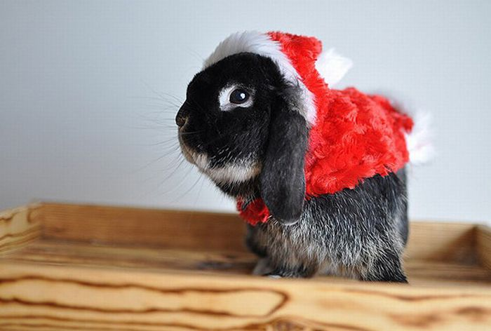 Christmas Animals Pictures