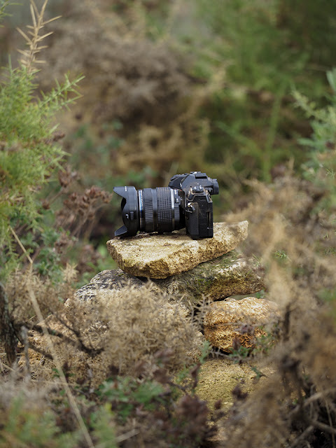 Olympus OM-D E-M1 Mark II Review In The Wild