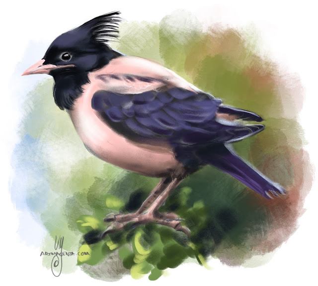 Rosy starling bird painting by Artmagenta