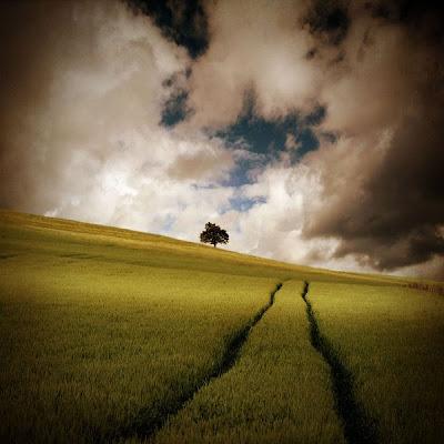 paisaje nublado y un árbol
