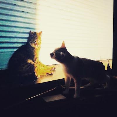 A mi gata le gusta la gatita de la película documental Kedi, Gatos de Estambul