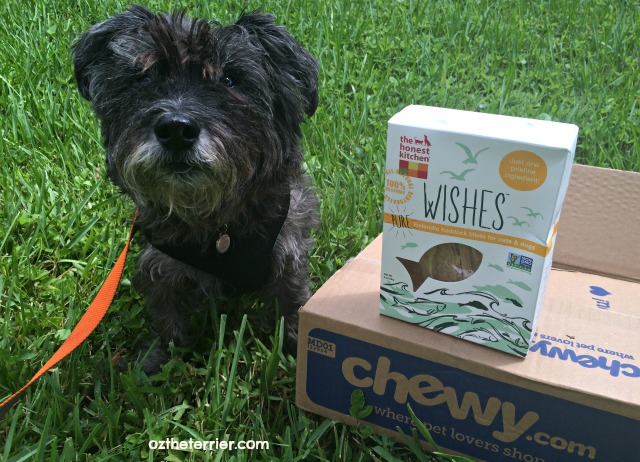 oz the terrier chewy.com delivers THK wishes