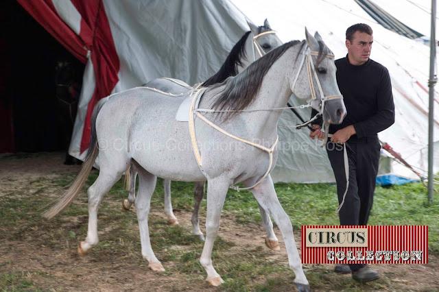 sortie de manège pour deux chevaux blanc