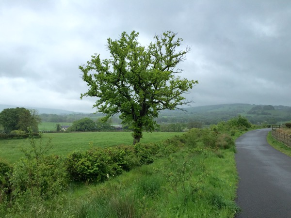 Wet Welsh countryside
