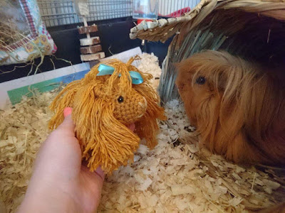 One crocheted guineapig and one real