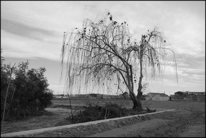 fotografía, Valencia, naturaleza, paisaje