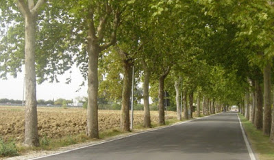 Causes of Planting of Tree on Road Sides and Method of Care of Trees