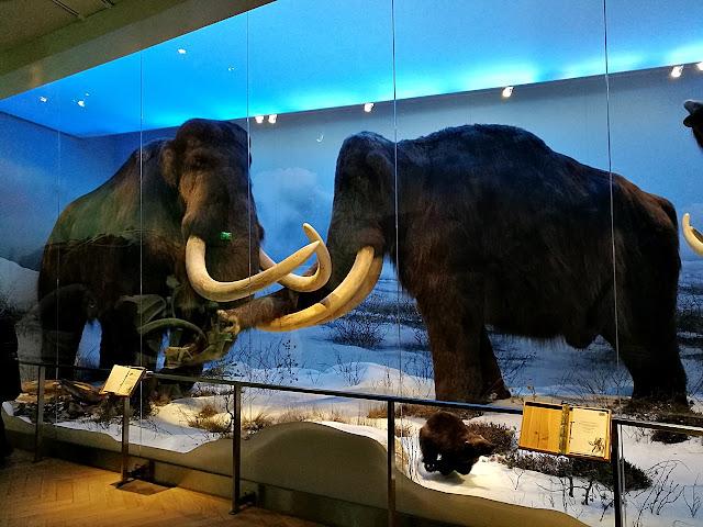 Luonnontieteellinen museo mammutti