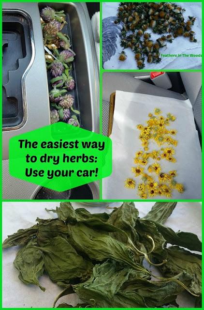 Dehydrate herbs in car