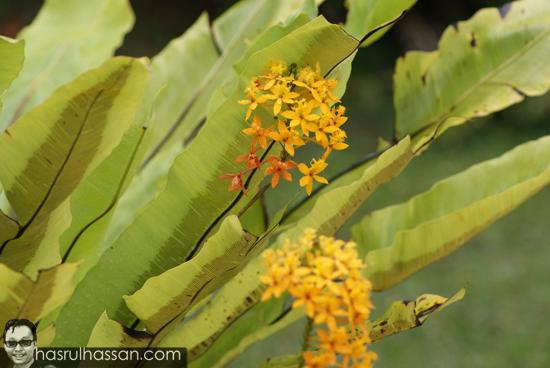 Bunga cantik di Cameron Highlands, Pahang, Malaysia