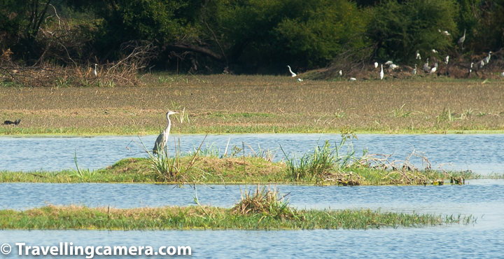Don't get frustrated if you don't see birds in the beginning of the tours inside Bharatpur Bird Sanctuary. In the beginning you need put lot of efforts but you would see birds but as you would go beyond the lake, you will start seeing hundreds of them on both sides of the road.