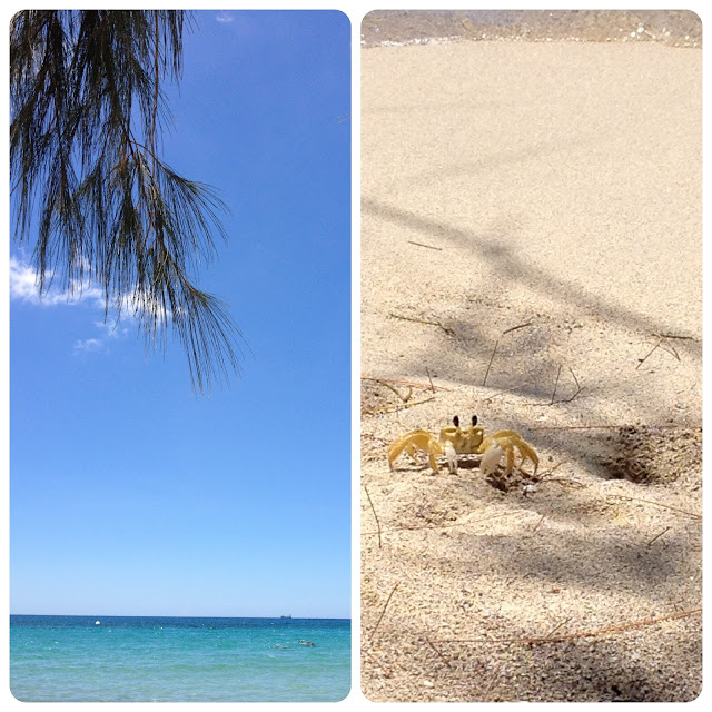 Sweet Kwisine, Martinique, crabes, plage, biscuit, citron, Martha Stewart