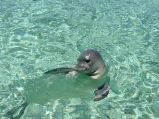 Μια μεσογειακή φώκια απαθανατίστηκε σε βίντεο εντός προστατευόμενης περιοχής του Δέλτα Καλαμά