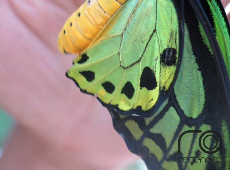 Preciosos colores de mariposa en Sentosa, Singapur