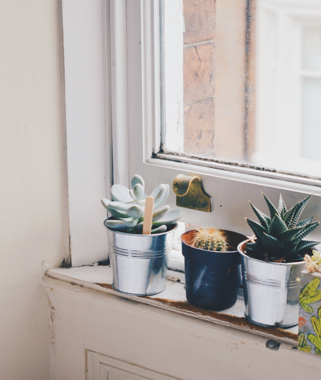plants on windowsill