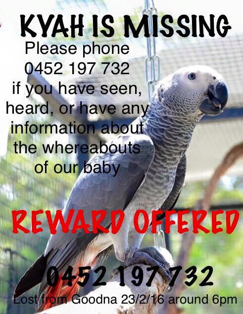 911 Parrot Alert's Resources for Lost & Found Parrots: Australia