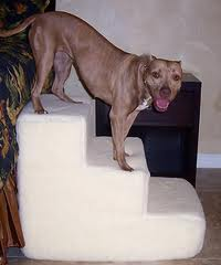 cães de grande porte
