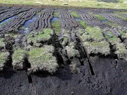 Jenis tanah gambut merupakan tanah yang dihasilkan oleh pelapukan tanaman. tanah jenis ini paling banyak di indonesia khususnya di didaerah timur indonesia di pulau kalimantan. Tanah gambut di kalimantan sangat luas dan banyak yang dimanfaatkan untuk lahan perkebunan kelapa sawit.