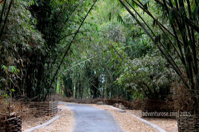 desa beleq, hutan bambu, desa adat, sembalun, arashimaya