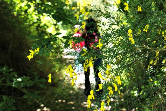 fervenza-casa-rural-lugo-galicia-flores-womantosantiago