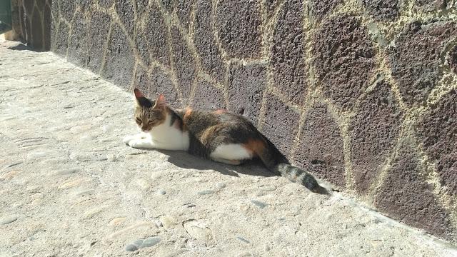 koty na Sycylii, Cefalu,