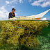Our Profile : Indonesia Seaweed Suppliers, Seaweed Factory, Dried Seaweed Suppliers, Seaweed Manufacturer